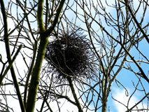 Big bird nest high up in trees with blue sky Royalty Free Stock Photography