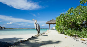 Big bird standing on the beach Royalty Free Stock Image