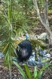 Big bird in a swamp Stock Images