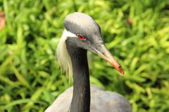 Big Bird. During trip in Brasil, kind of heron Royalty Free Stock Photo