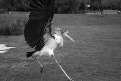 Big bird zoo Stock Photos