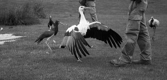 Big bird zoo Royalty Free Stock Photo