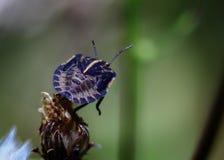 Big black bug Stock Photo