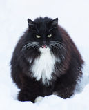 Big black cat. With green eyes on white background Royalty Free Stock Images