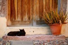 Big black cat Royalty Free Stock Image