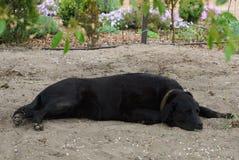 Big black dog lies and sleeps on the gray sand stock image