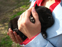 Big black puppy in a hand Stock Image