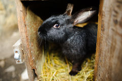 Big black rabbit in a cage. Royalty Free Stock Photos