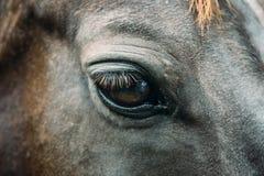 Big black sad eye of a beautiful dark horse. Close-up stock images