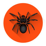 Big Black Spider Scary Insect Halloween Holiday Icon Stock Images