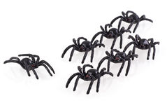 Big black spiders. Stock Image