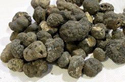 Big black truffle mushrooms very valuable royalty free stock photos