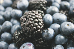 Big blackberry focus and blueberries Stock Images