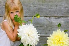 Big Bloomers Stock Photos