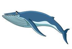 Big blue baleen whale. Swimming through the sea, cartoon illustration isolated on white Royalty Free Stock Photos