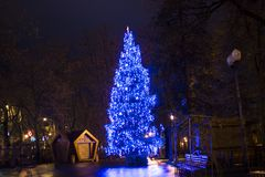 Big blue christmas tree in the park in the night Stock Photography