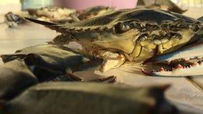 Big Blue-de Krab bekijkt ons en blaast Bellen stock videobeelden