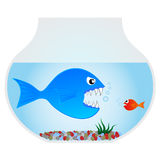 Big blue fish. Fierce fish trying to eat one small Stock Images
