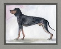 The big blue Gascon beagle painted in watercolor in profile Royalty Free Stock Image