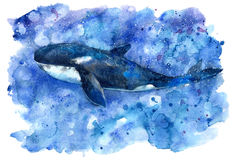 Big Blue Killer Whale and water. Watercolor hand drawn illustration. Realistic underwater animal art Stock Image