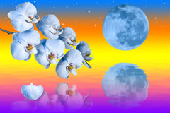 Big blue moon and branch of the orchids flowers Stock Image