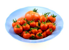 Big blue plate with red tomatoes isolated Stock Images
