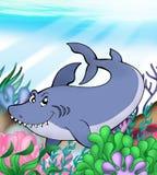 Big blue shark underwater Stock Photos