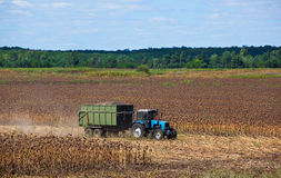 Big blue tractor rides through the field with a trailer loaded with sunflower seeds. Royalty Free Stock Photos