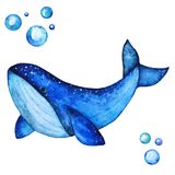 Big Blue Whale Handdrawing Watercolor Illustration a High Resolution stock illustration
