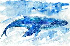 Big Blue Whale and water. Watercolor hand drawn illustration. Realistic underwater animal art Royalty Free Stock Images