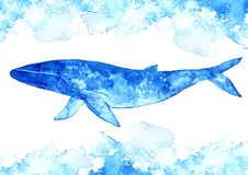 Big Blue Whale and water.Watercolor hand drawn illustration.Underwater animal art. White background Royalty Free Stock Photo