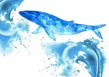 Big Blue Whale and water wave.Underwater animal art. Big Blue Whale and water wave.Watercolor hand drawn illustration.Underwater animal art Royalty Free Stock Photo