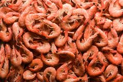 Big boiled shrimps close up royalty free stock images