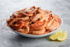 Big boiled shrimps in white plate stock photography