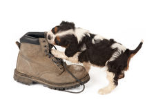 Big boot with small dog royalty free stock images