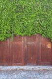 Big bordeaux modern wooden door coverd with green ivy overgrown. Patern fence Stock Photography