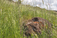 The big boulder in a grass. Stock Photos