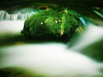 Big boulders covered by fresh green moss in foamy water of mountain river. Light blurred cold water with reflections, white whirlp Stock Photography