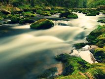 Big boulders covered by fresh green moss in foamy water of mountain river. Light blurred cold water with reflections, white whirlp Royalty Free Stock Images