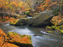 Big boulders with fallen leaves. Autumn mountain river banks. Gravel and fresh green mossy boulders on banks with colorful leaves. Royalty Free Stock Image
