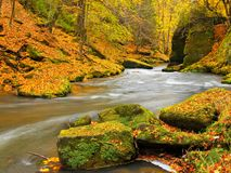 Big boulders with fallen leaves. Autumn mountain river banks. Gravel and fresh green mossy boulders on banks with colorful leaves. Royalty Free Stock Photo