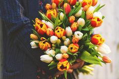 Big bouquet of colorful tulips Stock Photos