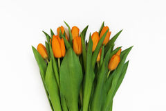 Big bouquet of fresh orange tulips, isolated on white background.  Royalty Free Stock Photos