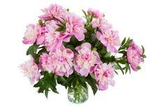 Big bouquet of pink peonies Stock Photos