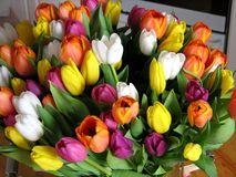A big bouquet of tulips Stock Images