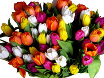 A big bouquet of tulips Stock Photo
