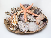 Big bowl of different seashells with starfish Stock Image