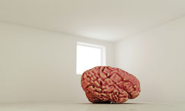 Big brain Stock Images