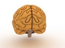 Big Brain #3 Stock Images