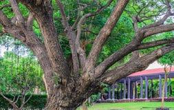 Big Branch.  Stock Photo